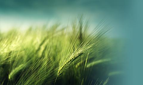 Regeneração verde