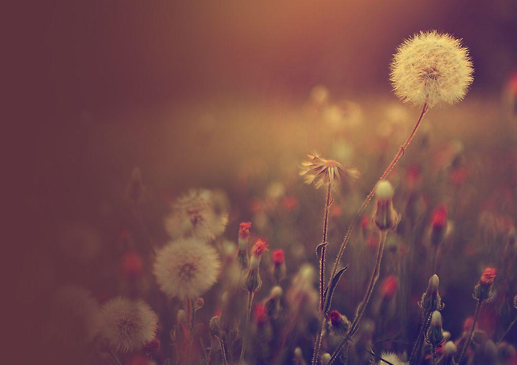 [São as pequenas coisas da vida que nos fazem felizes. Bela melodia de piano Hi-Fi que vai tocar o seu coração]